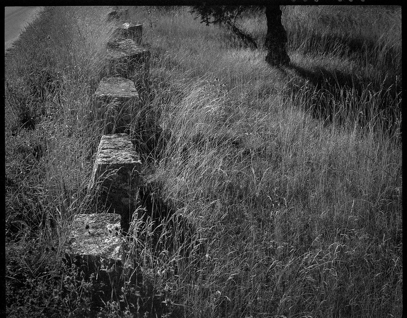 granite blocks, roadside markers, grasses, spruce tree, backlit, Spruce Head, Maine, Koni Omega Rapid 100, Super Omegon 90mm f-3.5, Arista.Edu 200, Ilford Ilfosol 3 developer, 7.20.18