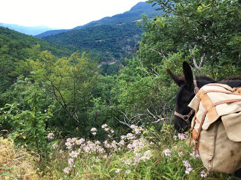 pablo apres la montee de florac vers cassagnas