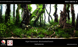 enchanted forest nature aquarium aquascape nigel aquascaping ciac rank 69   by nigel_kh