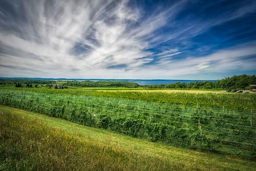 grandtraversecounty oldmission samyang12mm vineyard landscape sky wine winery
