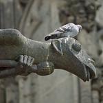 Auf den Wasserspeiern des Kölner Doms machen es sich oft Stadttauben bequem