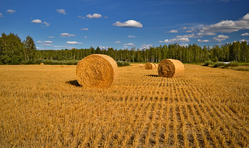 A piece of Finnish countryside. Finland, Summer, August | by L.Lahtinen (nature photography)