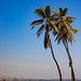 Palm trees in front of the sea, Benguela Province, Lobito, Angola