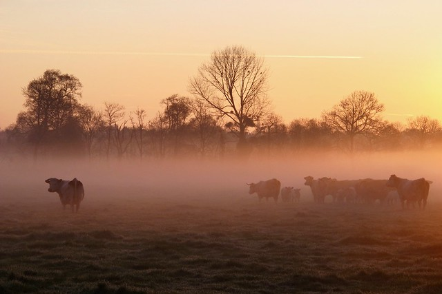 Morning in Normandy