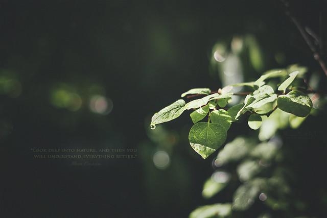 .Nature teaches quietly.