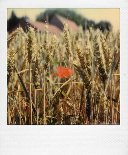 Dans les champs ... | by @necDOT