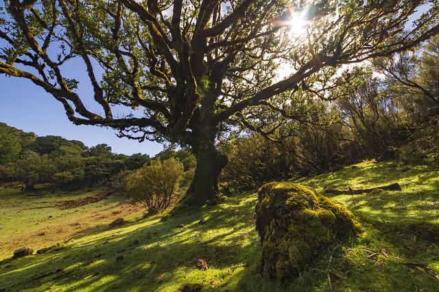 Madeira Lorbeerwald UNESCO Weltnaturerbe Laurasilva