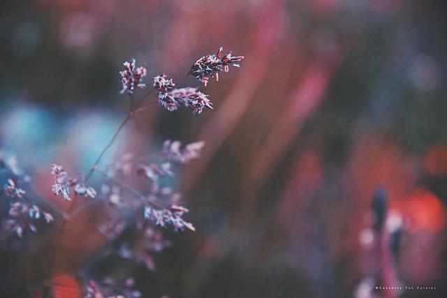De flor a  Semilla; el ciclo de la vida