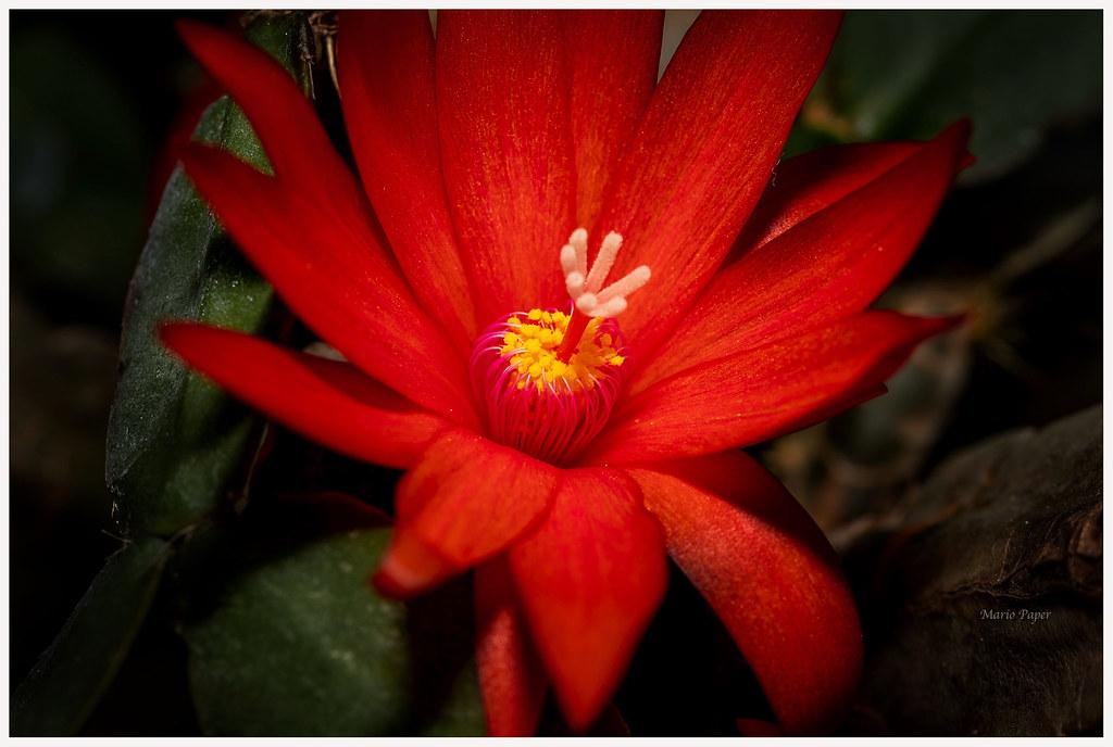 Guten Morgen Und Einen Schönen Tag Zusammen Lg Blühender Flickr