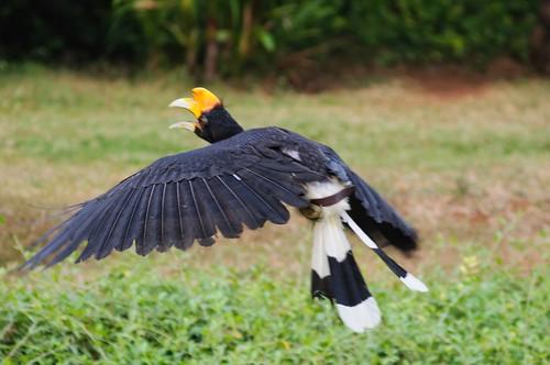 Landing and take-off   by Arnold Adikrishna