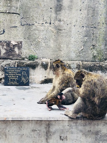 In memory of... Macaque monkey   by iamsittingpretty