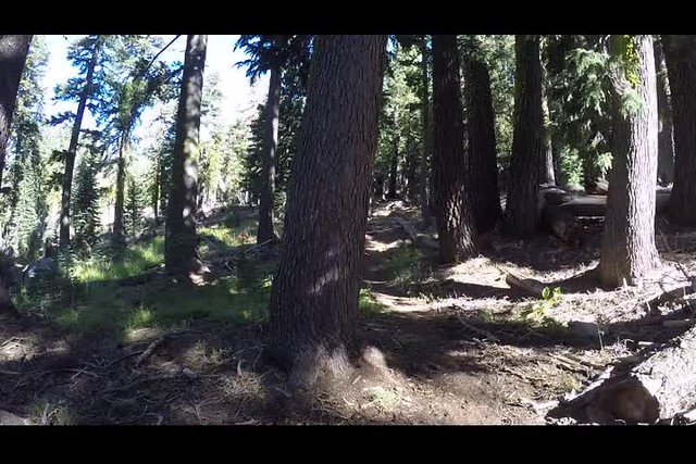 1015 GoPro panorama video of the quiet, peaceful pine forest on the Tahoe-Yosemite Trail west of Phipps Peak