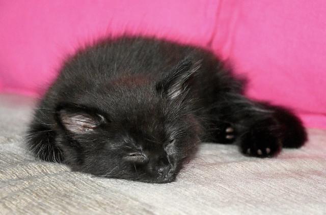Kitten nap.