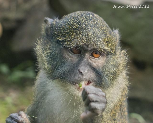 Zoo Monkey