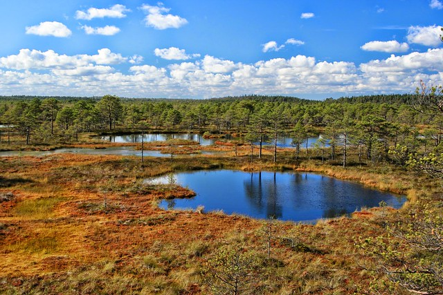 Rabas / In the bog, Estonia