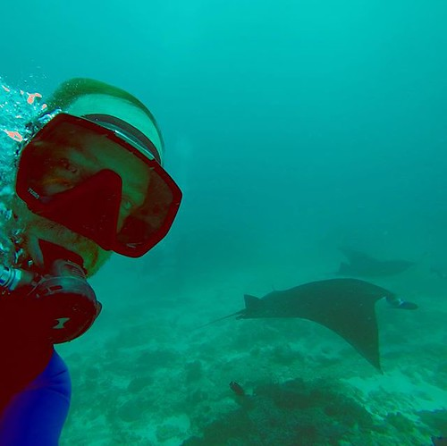 Selfies with Mantas 😂😱😍🙏♂️ #mantaray #scubadiving #scuba #makeitcount #IslandLife #indonesia #diving #sealife #nusapenida #island #mantapointnusapenida | by pedro.custodio