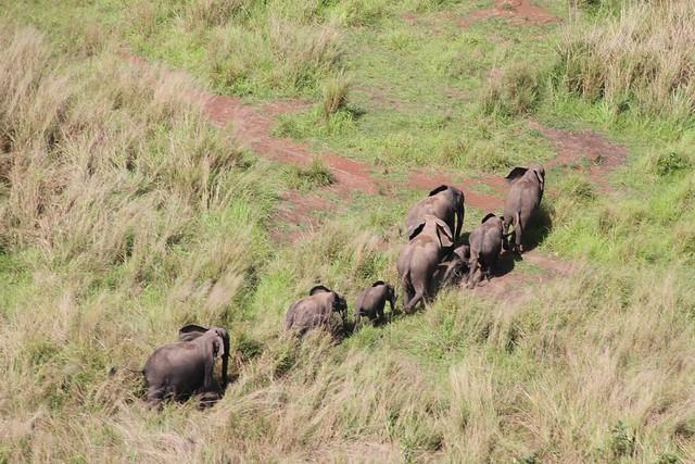 Elephants Garamba