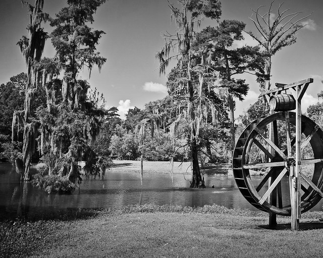 Bogalusa Swamp Scene