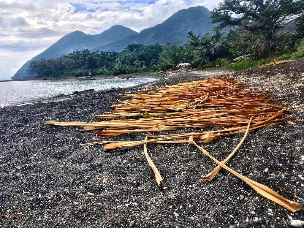 Drying pandanus fronds for weaving. Potnarvin, Vanuatu.