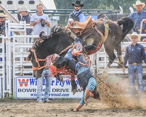 2018 CPRA Cochrane Aug11 - Saddle BroncB 318 | by calgarypolicerodeophotos