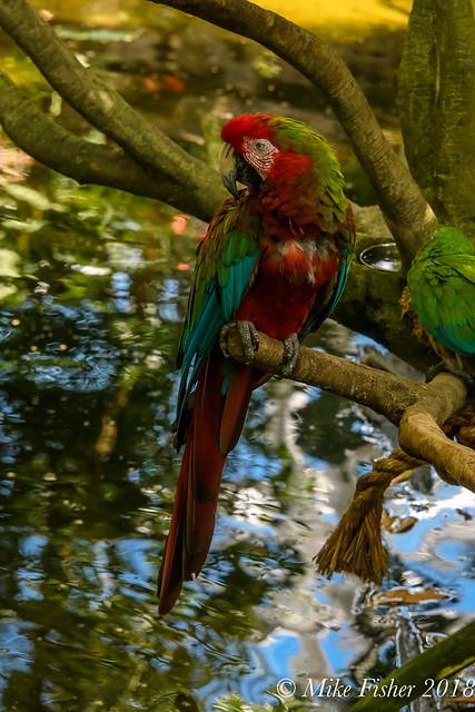 Bird of a Tropical Paradise