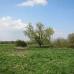 Wiesenbereich im NSG Am Ginsterpfad im Frühling