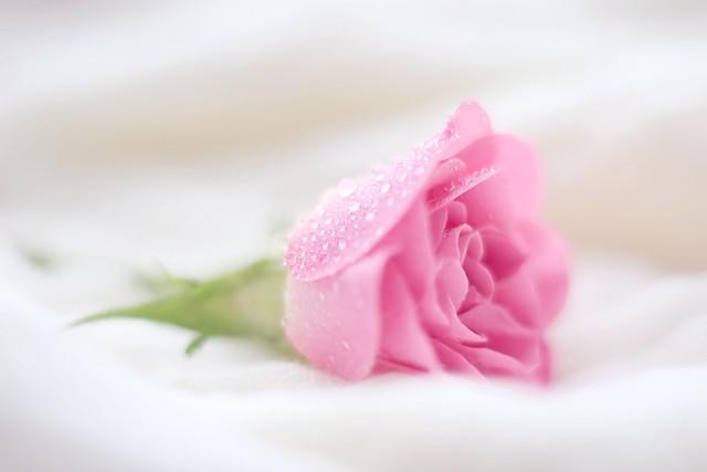 Rosa ❤️