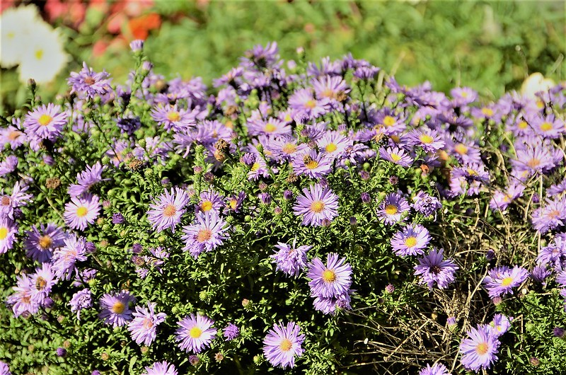Aster 15.09 (1)