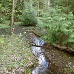Bachlauf im NSG Thielenbruch und Thurner Wald