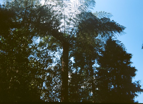 Looking up at tree  fern | by Matthew Paul Argall