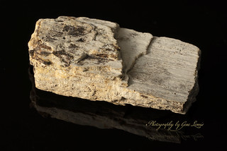 Wooly Mammoth tusk   by navydoc45