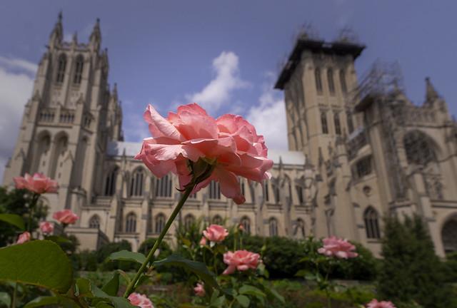 The Bishop's Garden at Washington National Cathedral