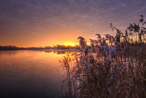 canon6d sunrise sun morning dawn lake water reflection reeds sky clouds colour outdoors nature uk cambridgeshire