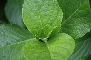 Inside green   by ferrvic