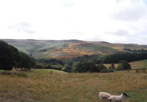 Eyam Moor, from Highlow Hall SWC Walk 315 - Hathersage Circular (via Bretton Clough and Eyam)