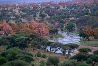 Sunset over the Tarangire River   by Laura Jacobsen