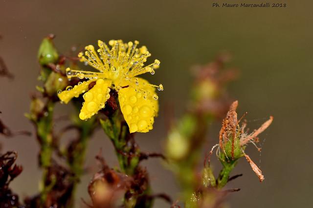 Un giallo tra i primi colori dell'autunno