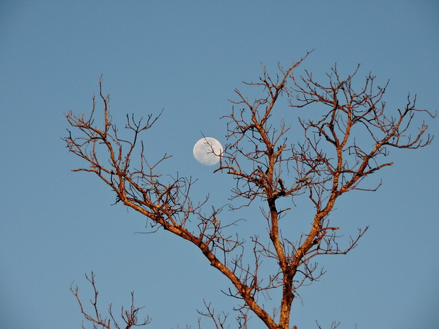 The moon behind the tree.
