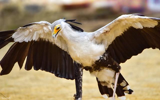Bird - 5756