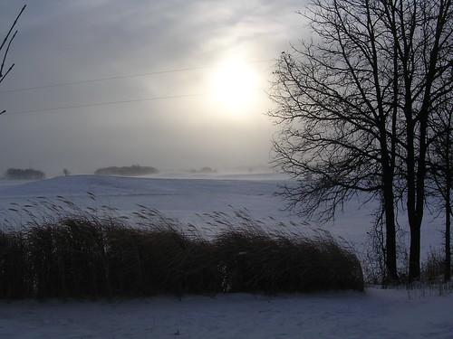 winter snow grass minnesota wind windy bleak mn minn blowingsnow wintersun wintry albertlea freeborncounty