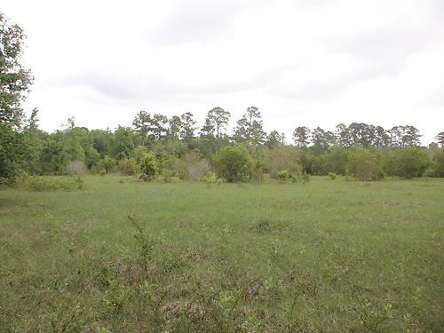 county acres 140 brantley