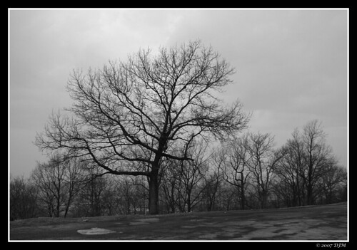 Free naked tree in winter Stock Photo - FreeImages.com