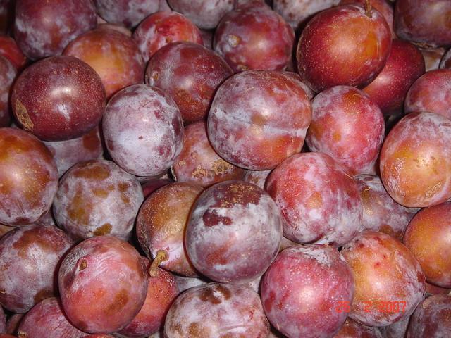 Buah Plum Scientific Name Prunus Domestica Family Rosacea Flickr