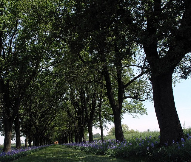 Viale di Quercus e Iris