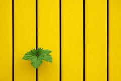 low, yellow, Green, yellow, yellow, yellow, yel... | by / juL /