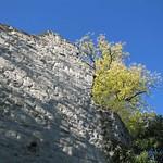 Mauer der Burg Drachenfels und Vegetation