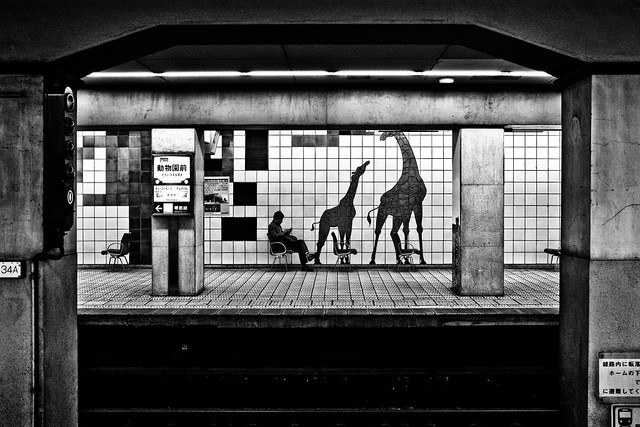 Urban Giraffes....