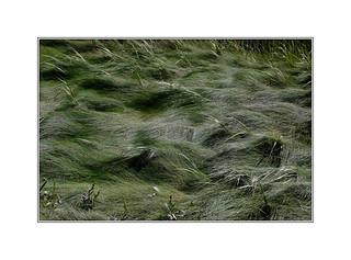 DSCF7101 | by bernard marenger photo imagination