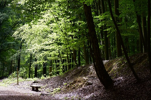 aplacetorest brussels bruxelles belgium belgique tree trees light bench forest intimatelandscape walking leaves green greenspace forêtdesoignes tervuren nikond7200 jacquesteller