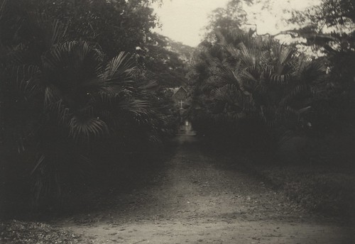 Garden Walk, Port of Spain, Trinidad, ca 1895 | by The Caribbean Photo Archive